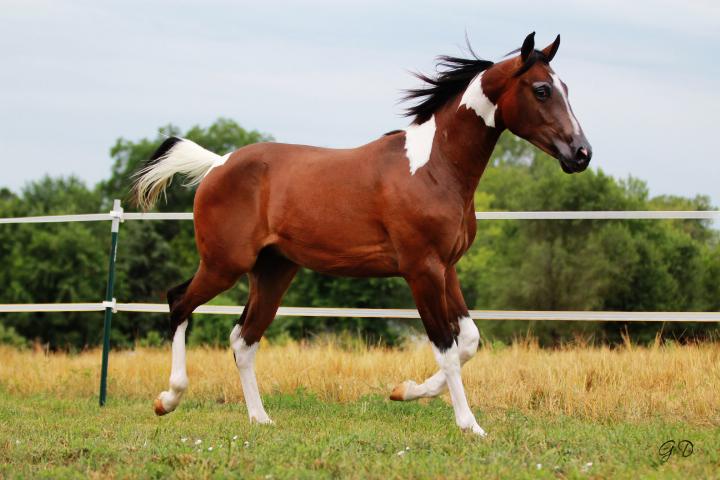 壁纸 动物 马 骑马 720_480
